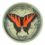 NUGZ Jewelry 73808 Charm-Nugz Snap On-Monarch Butterfly-Glass Print