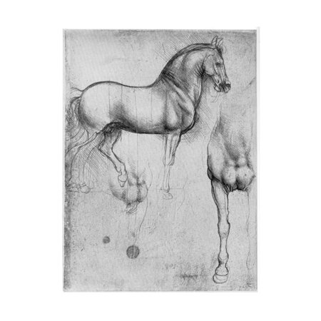 Studies of Horses, C1490 Italian Renaissance Horse Equestrian Sketch Drawing Print Wall Art By Leonardo da