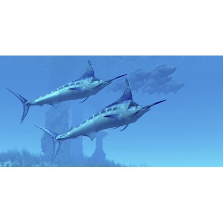 Two Sleek Blue Marlins Swim Close To A School Of Fish Canvas Art   Corey Fordstocktrek Images  40 X 20