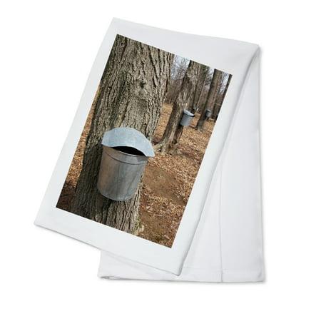 Maple Tree Sap Buckets - Lantern Press Photography (100% Cotton Kitchen Towel)