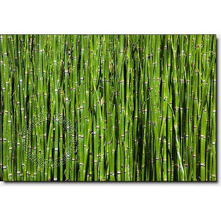 Bamboo Backround Peel & Stick Canvas Wall Mural - Bamboo Wall Murals