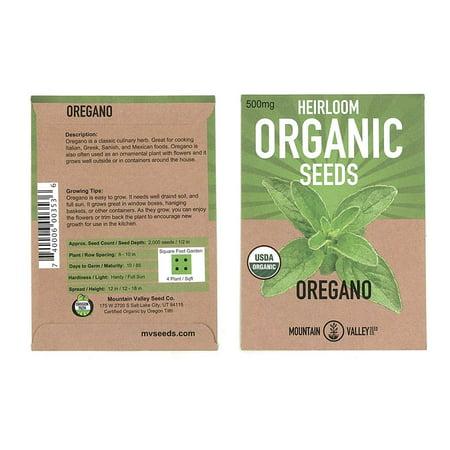 Oregano Herb Garden Seeds - Common Italian - 500 mg Packet - Non-GMO, Certified Organic Oregano Herbal Spice Gardeing Seed (Organic Herb Garden)