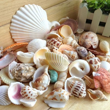 200g/pack Natural Beach Shell&Conch SeaShells Aquarium Fish Tank Landscaping - Toy Aquarium