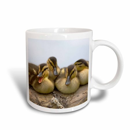 3dRose USA, Washington, Seattle. Mallard ducks clutch of ducklings., Ceramic Mug, 15-ounce](Ceramic Duck)