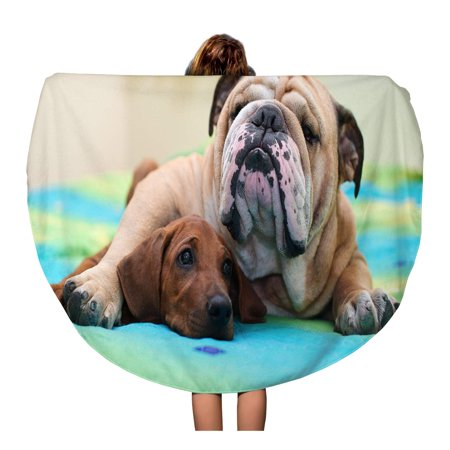 LADDKA 60 inch Round Beach Towel Blanket Ridgeback Puppy and English Bulldog Best Dog Friends Relaxing Travel Circle Circular Towels Mat Tapestry Beach (Best English Bulldog Breeders)