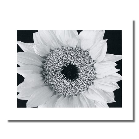 Sunflower Close Up Black and White Photo Wall Picture 8x10 Art (Best Way To Print Black And White Photos)