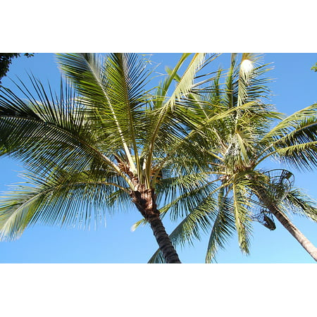 LAMINATED POSTER Palm Trees Frond Australia Summer Poster Print 24 x 36