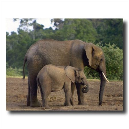 Kid Art Elephant - African Elephant And Baby Kids Wall Picture Art Print