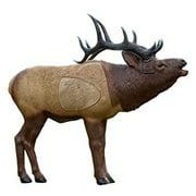 Best Crossbow Targets - Rinehart Targets 44 Inch Realistic Woodland Elk 3D Review