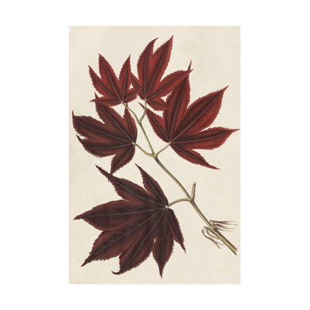 Japanese Maple Leaves III Print Wall Art By Stroobant