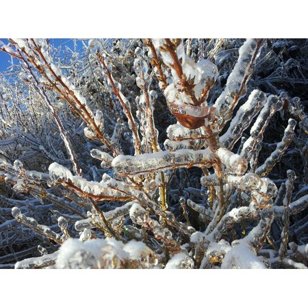 Canvas Print Tree Icy Freeze Ice Frozen Winter Snowy Frosty Stretched  Canvas 10 x 14