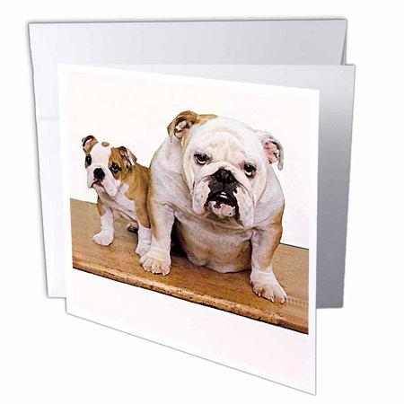 3drose british bulldog male greeting cards 6 x 6 inches set of 12 3drose british bulldog male greeting cards 6 x 6 inches set of 12 m4hsunfo