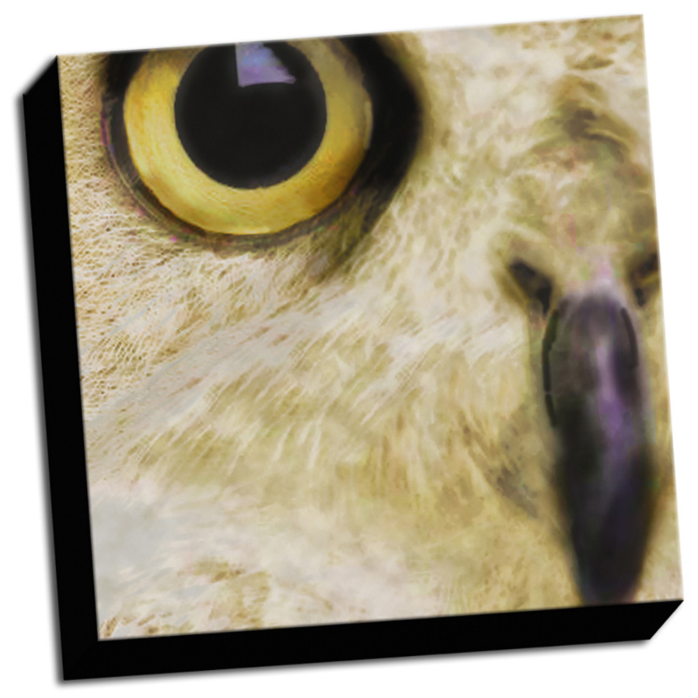 Owl Close Up Printed on Canvas Stretched Framed Ready to Hang