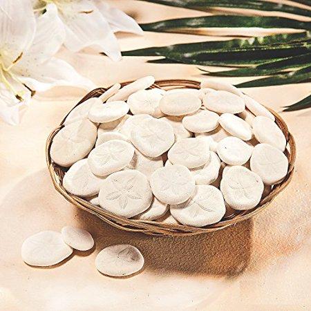 Fun Express - Natural Sand Dollars in Basket (1-Pack)