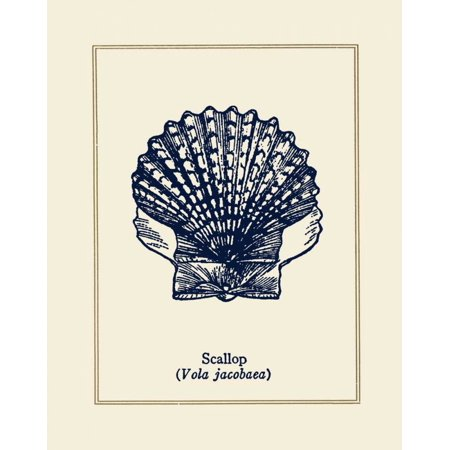 Scallop Shell Stretched Canvas - Gregory Gorham (24 x 30)