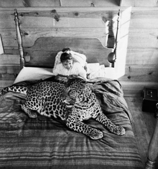 High angle view of a girl sitting on the bed with a leopard Poster Print
