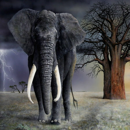 Laminated Poster Elephant Art Tusk Trunk Ears Mammoth African Poster Print 24 x 36