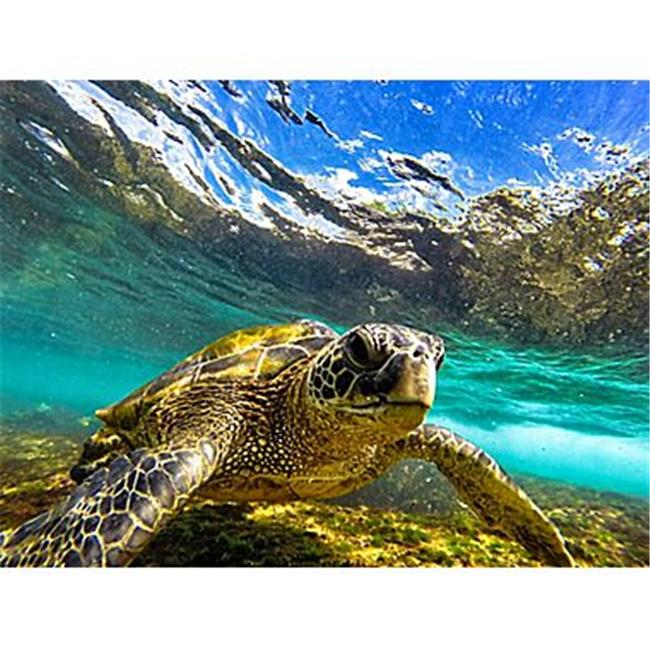 VersaTraction KG-JNAHST2 No Slip Sea Turtle 2 Shower Mat