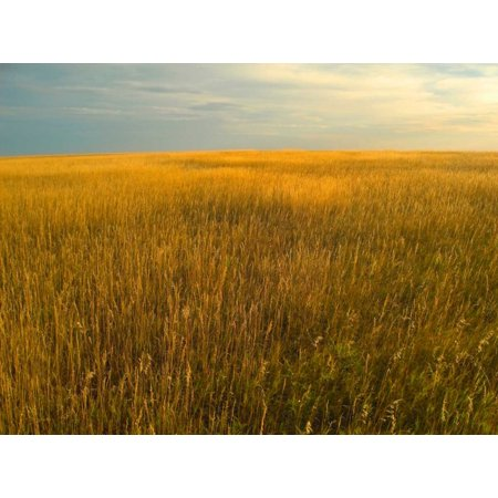 Upper prairie in Badlands National Park South Dakota Poster Print by Tim Fitzharris