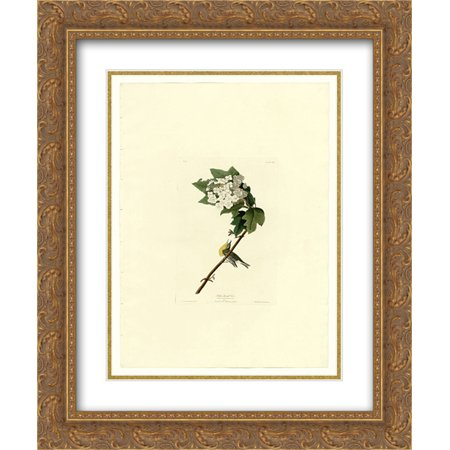 John James Audubon 2x Matted 20x24 Gold Ornate Framed Art Print 'Plate 119 Yellow-throated - 119 Matt