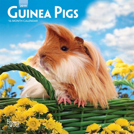 - 2019 Guinea Pigs Mini Calendar,  by BrownTrout