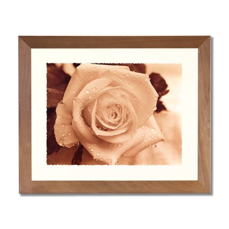 Rose In Rain B/W Photo Flower Contemporary Wall Picture Honey Framed Art Print