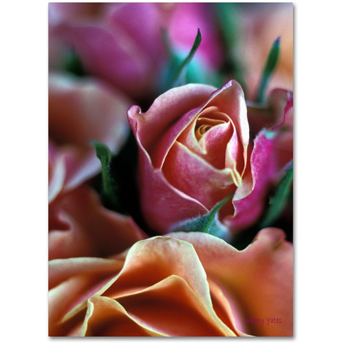"Trademark Fine Art ""Mauve and Peach Roses"" Canvas Art by Kathy Yates"