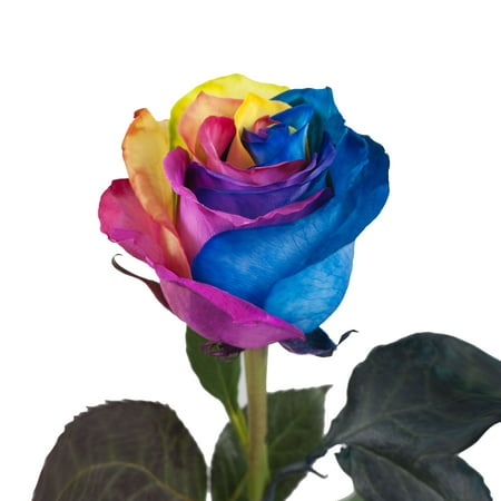 Natural Fresh Flowers Tinted Rainbow Roses 20 50 Stems