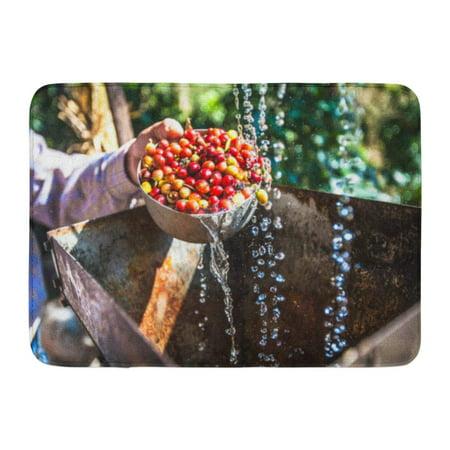GODPOK Yellow Plantation Green Farm Fresh Coffee Beans Washing Wet Process Red Wash Harvest Rug Doormat Bath Mat 23.6x15.7 inch (Green Coffee Beans Assortment)