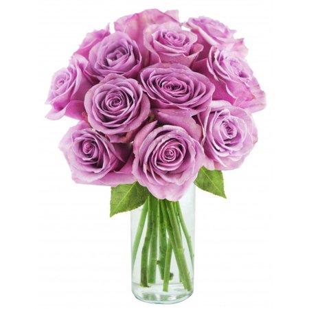Kabloom Bouquet Of 12 Fresh Cut Purple Roses Farm Fresh Long Stem
