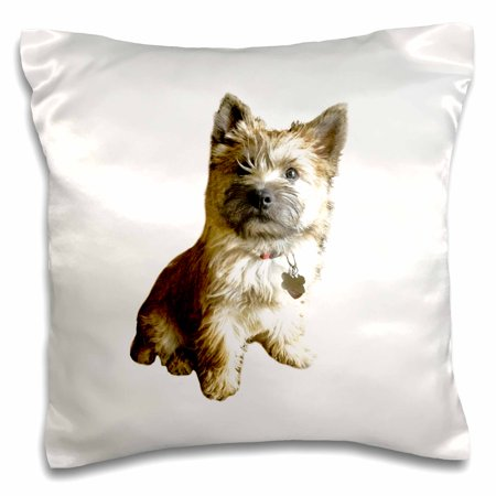- 3dRose The Cutest Cairn Terrier in the World Cuter than Toto Wizard of Oz - Pillow Case, 16 by 16-inch