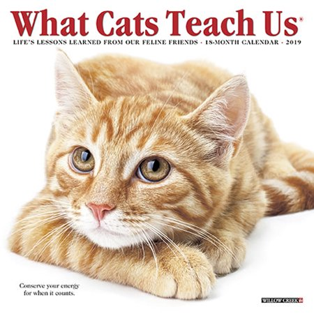 What Cats Teach Us 2019 Calendar