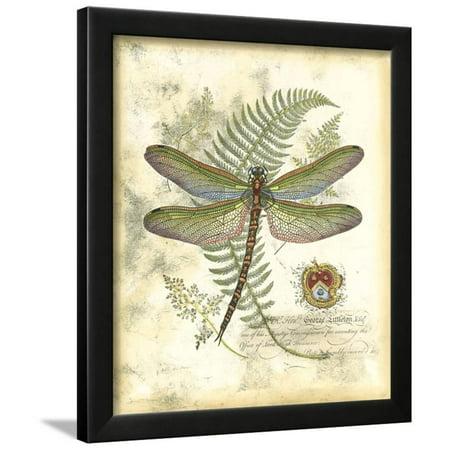 Mini Regal Dragonfly I Framed Print Wall Art By Vision Studio