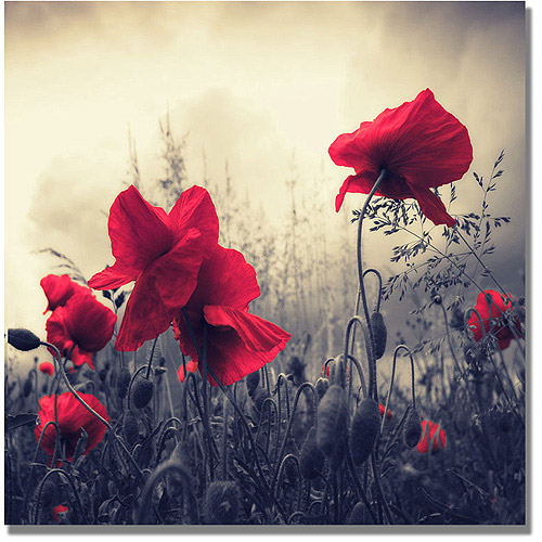 "Trademark Art ""Red For Love"" Canvas Wall Art by Philippe Sainte-Laudy"