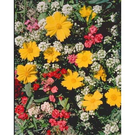 The Dirty Gardener Low Growing Wildflower Seed Mixture - 0.5 - Growing Wildflower