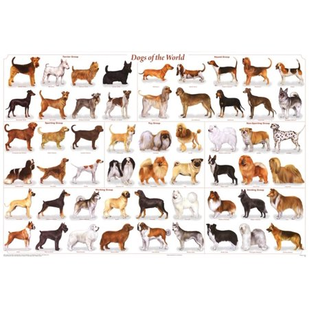 Laminated Dogs of the World Educational Animal Chart Poster Laminated