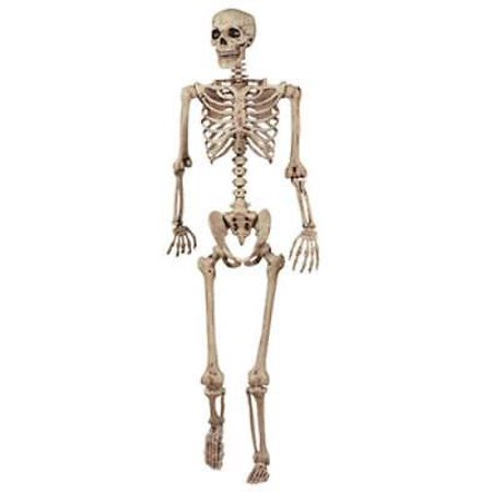 5' Life Size Realistic Pose N Stay Skeleton Arms and Legs Feature - Life Size Skeletons