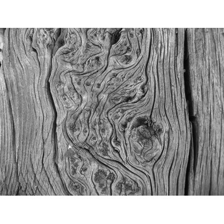 Canvas Print Wood Curves Black and White Photo Trunk Stretched Canvas 10 x (Best Way To Print Black And White Photos)