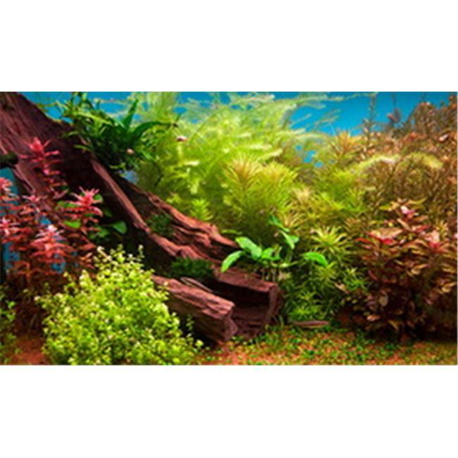 Fresh Water Plants 3d Depth Aquarium Background 20 Gallon by MansBestFriend