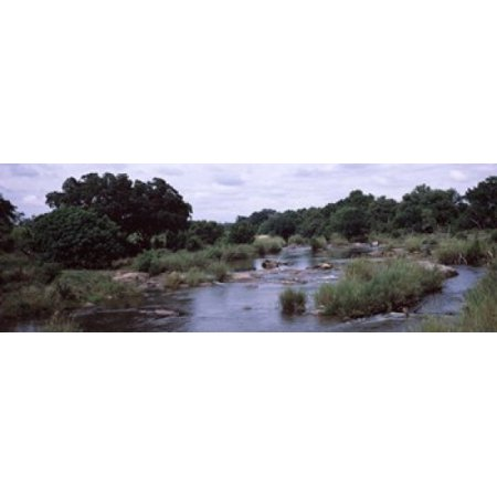 River flowing through a forest Sabie River Kruger National Park South Africa Poster Print - Halloween Freddy Krueger Prank