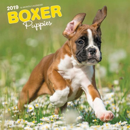 2019 Boxer Puppies Wall Calendar, by BrownTrout (Best Puppy Names 2019)
