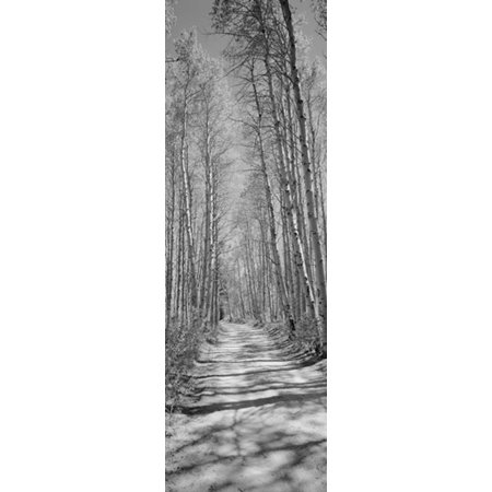 Trees Along A Road Log Cabin Gold Mine Eastern Sierra Californian Sierra Nevada California Usa Canvas Art   Panoramic Images  36 X 12