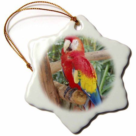 3dRose Live Parrot On Tropical Tree - Snowflake Ornament, 3-inch (Medium Parrot Tree)