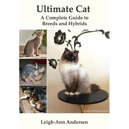 Ultimate Cat: A Complete Guide to Breeds and Hybrids -