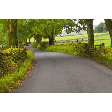 Country Road, Yorkshire Dales National Park, Yorkshire, England, United Kingdom, Europe Print Wall Art By Miles