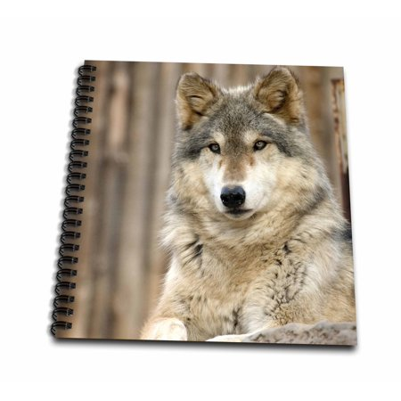 3dRose Gray Wolf, Folsom City Zoo, California - US05 TAU0105 - Tananarive Aubert - Memory Book, 12 by 12-inch ()