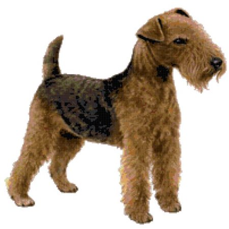 - Lakeland Terrier Dog Counted Cross Stitch Pattern