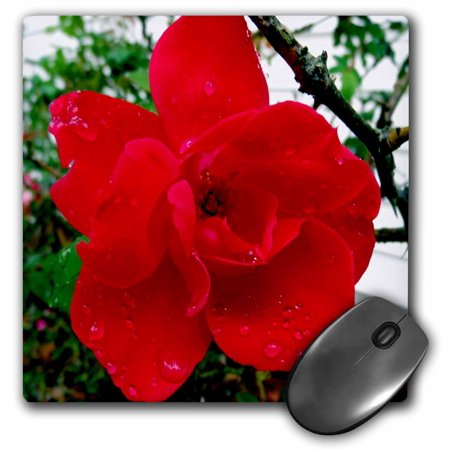3dRose Dewy Rose,Red Knockout Rose with dew drops, Mouse Pad, 8 by 8 inches ()