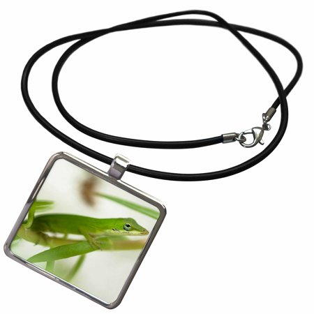 3dRose Male green anole lizard, Talahassee, FL - US39 JMC0028 - Joe and Mary Ann McDonald - Necklace with Pendant -