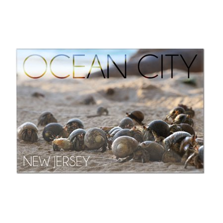 Ocean City  New Jersey   Group Of Hermit Crabs   Lantern Press Photography  12X8 Acrylic Wall Art Gallery Quality